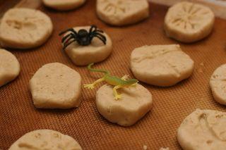 Lizard_spider
